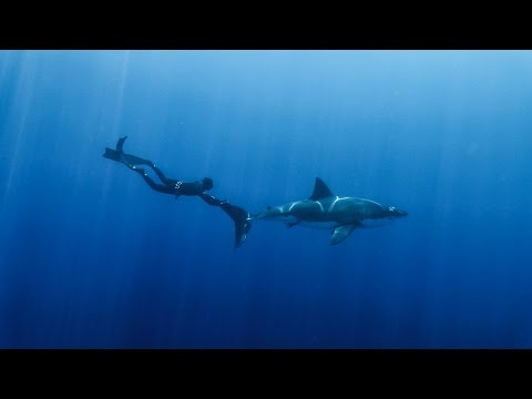 Harbor House Life: Spearfishing with Great White Sharks
