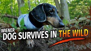 OAKLEY'S WILDERNESS SURVIVAL  Funny Talking Wiener Dog!