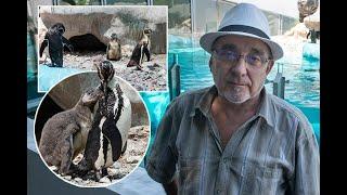 PRVI SRPSKI PINGVIN: Prinova u beogradskom Zoo vrtu!