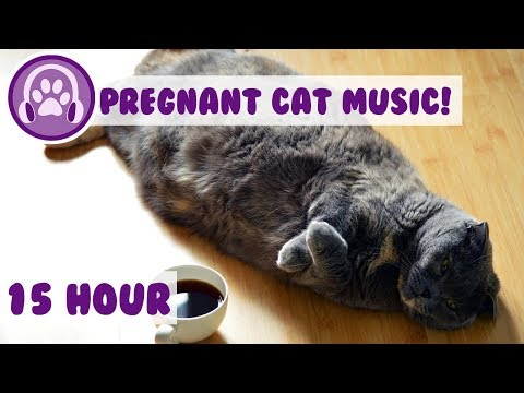 How to Relax My Pregnant Cat - Ultimate Calming Mix for Cats - New Improved 🐈 (2018)