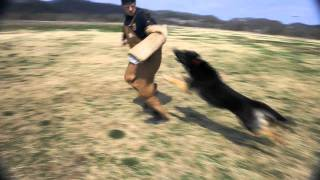 Nashville Dog Training | Protection Dogs | Dog Obedience | Dog Agility
