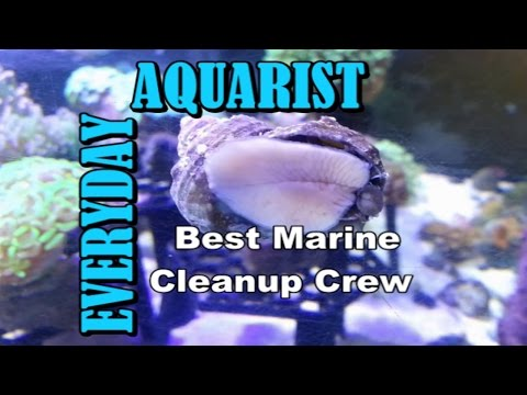 Best Clean Up Crew For Marine Aquarium