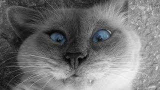 видео Музей «Республика кошек»
