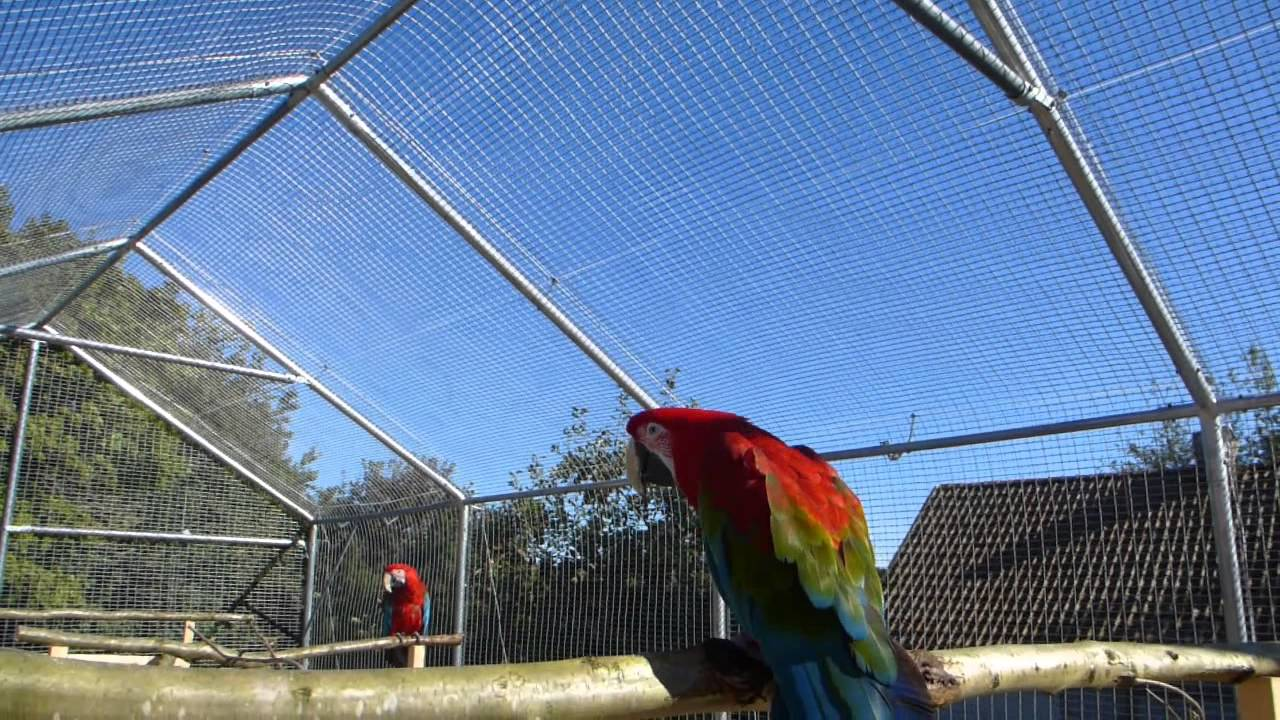 My Macaws New Outdoor Aviary Youtube