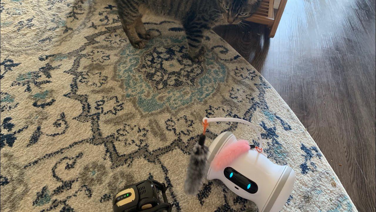 Vector - Pet Fitness Robot?