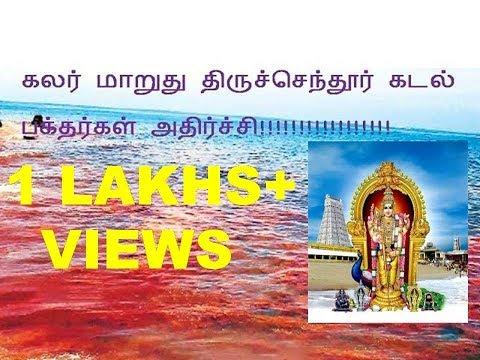 கலர் மாறுது திருச்செந்தூர் கடல்!!!!பக்தர்கள் அதிர்ச்சி!!!!Thiruchendur sea colour changes in to Red