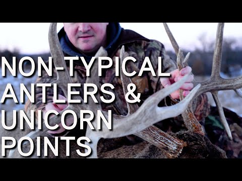 Non Typical Antlers & Unicorn Points | How Bucks Grow Them