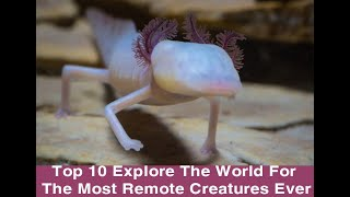 Top 10 Explore The World For The Most Remote Creatures Ever