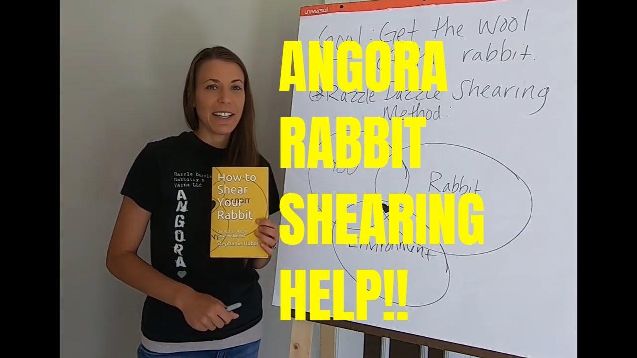 How to shear angora rabbit. Angora rabbit shearing help!