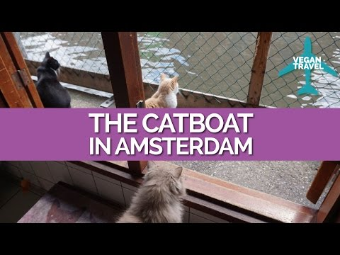 Vegan Travel to the Catboat in Amsterdam!