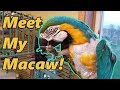 How to Groom a Parrot (meet my macaw!)