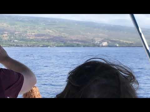 Body Glove Hawaii Whale Watch