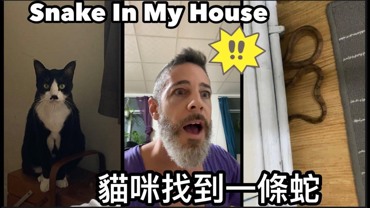 什麼!😱貓咪在家裡找到蛇🐍 There's A Snake In My House