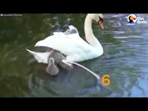 2017 04 03 VIDEO 00002396