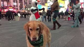 Fritz Tries To Catch Dog Treats In New York