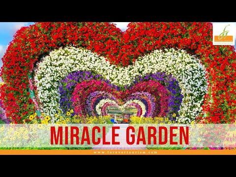 Dubai miracle garden – worlds largest natural flower garden 🌻    biggest flower garden in the world
