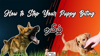 How to Stop Your Puppy Biting in Easy Steps Tamil