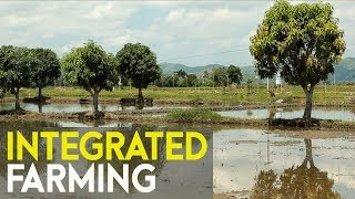 Integrated Farming | Success story of Filipino farmer in  integrated farming | #Agriculture