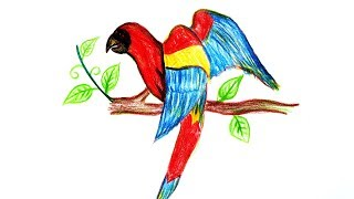 Wood pencil art,,Parrot Drawing for kids,,art 3D bird on white paper by pencil