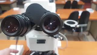 편광현미경 관찰 영상