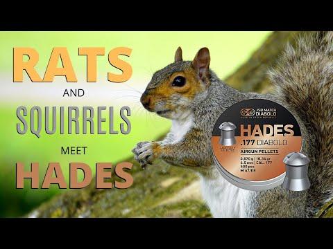 rats-and-squirrels-meet-hades---air-rifle-pest-control