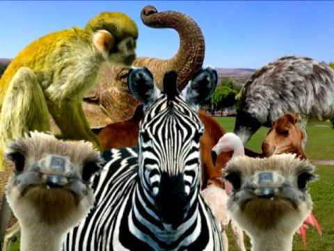 Gaziantep Zoo Trip