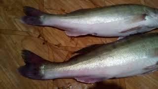 Убойная рыбалка на реке Исеть 1 сентября 2021 Cj Rise Destruction Of The Earth