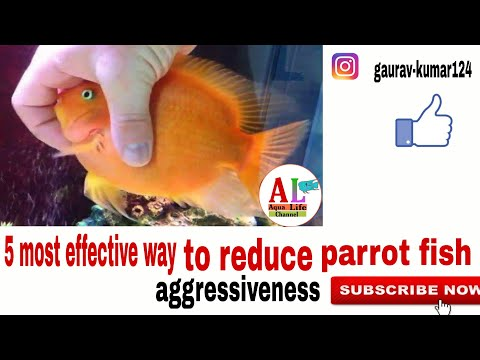 Top 5 Effective Tips To Reduce Your Parrot Fish Aggressiveness