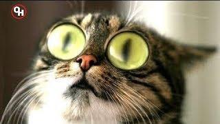 Я РЖАЛ ПОЛ ЧАСА. Смешные Коты и Собаки. ПРИКОЛЫ С ЖИВОТНЫМИ.