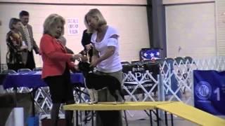 Staffords @ Douglasville Kennel Club Of Georgia - 8th April 2015