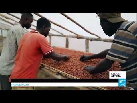 DR Congo: Can farming co-ops help cocoa farmers?