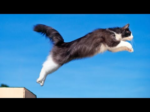 CAT JUMPING UP AND DOWN REALLY FAST!!!