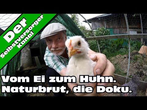Vom Ei zum Huhn.  Naturbrut.  Die Doku