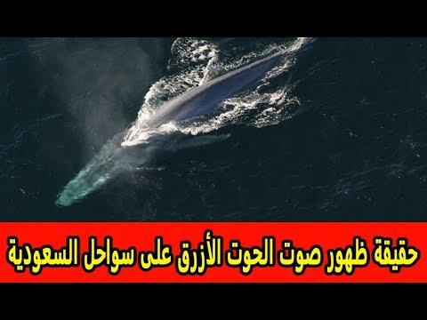 حقيقة ظهور صوت الحوت الأزرق على سواحل السعودية ومفاجأة تنتظر الخليج Youtube