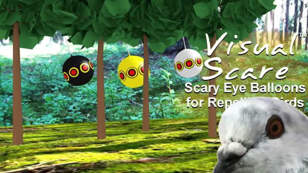 VisualScare Scary Eye Balloons - humane bird repellent