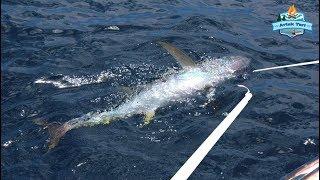 Orkinos Zamanı.!! 200 Kg Balıklar Arasında Zargana ve Levrek - 01 Ağustos 2018