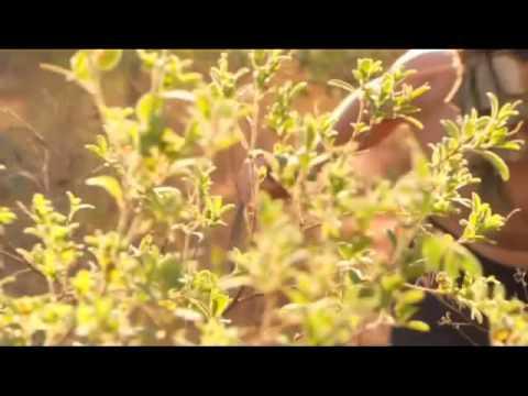 Castaway - Australian TV Series Promo Reel