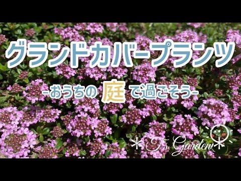 sub〚グランドカバープランツ》ガーデニング:蚱いっぱいの庭づく゚〚t's-garden》#4k