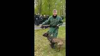 POLIZEI VS FUßBALLFANS ! POLIZEIHUNDE