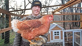 The NEW Backyard Chickens are here!