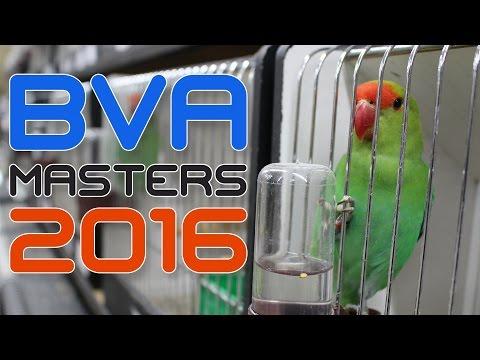 BVA Masters 2016  Lovebird International