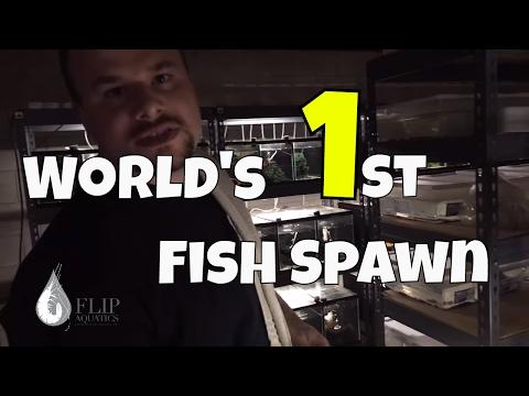 Fish Room Tour: Over 150 Aquariums, Zebra Plecos and Much More