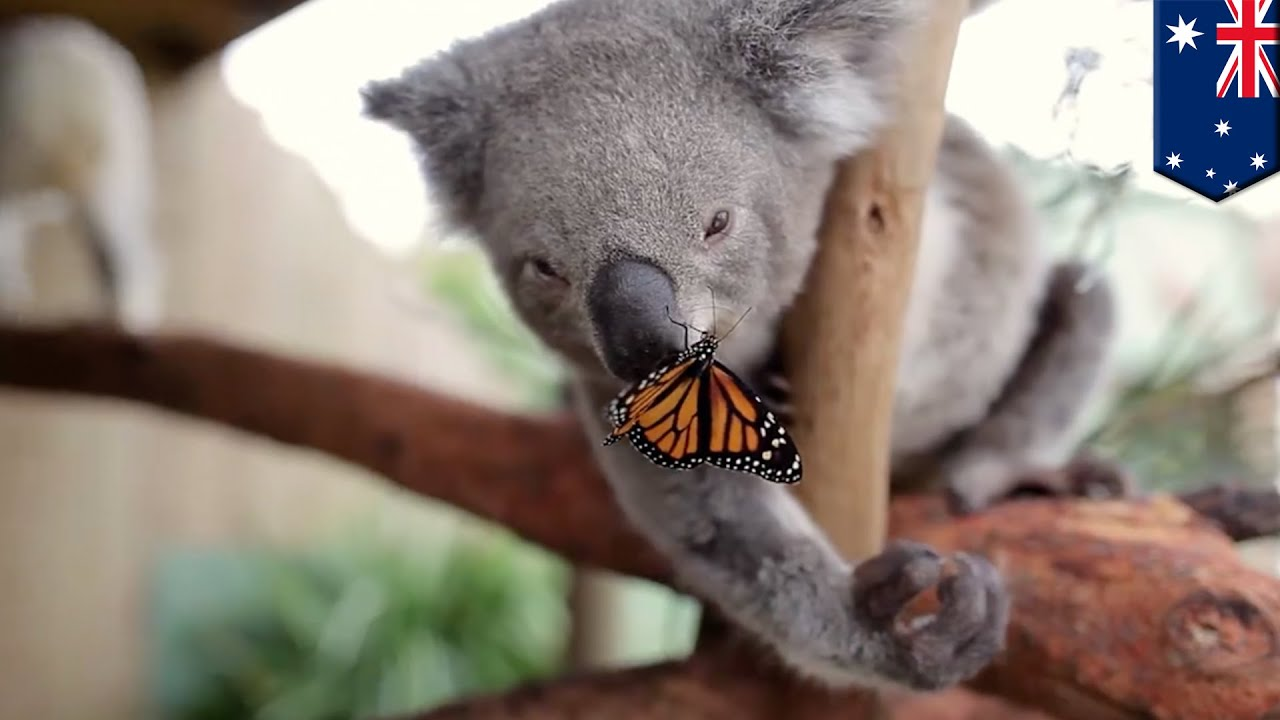 animated-images-of-butterfly