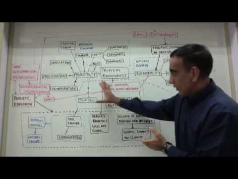 IB Environmental Systems And Societies Exam Tips- The Holistic Approach