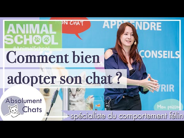 Comment bien adopter son chat