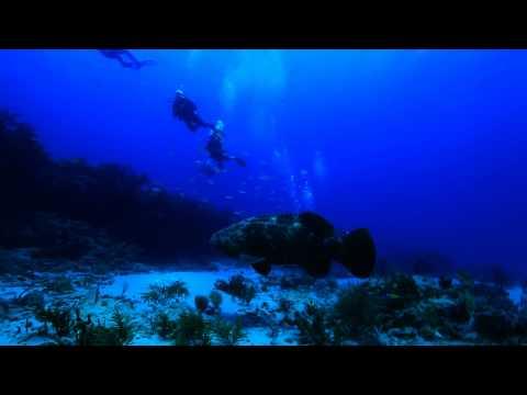 Palm Beach reefs- South