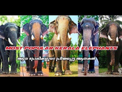 Most Popular Kerala Elephants 2018 - ആന പ്രേമികളുടെ  പ്രിയപ്പെട്ട ആനകള്
