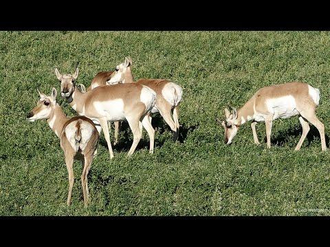 Colorado Wildlife - In A Colorado Minute (Week 351)