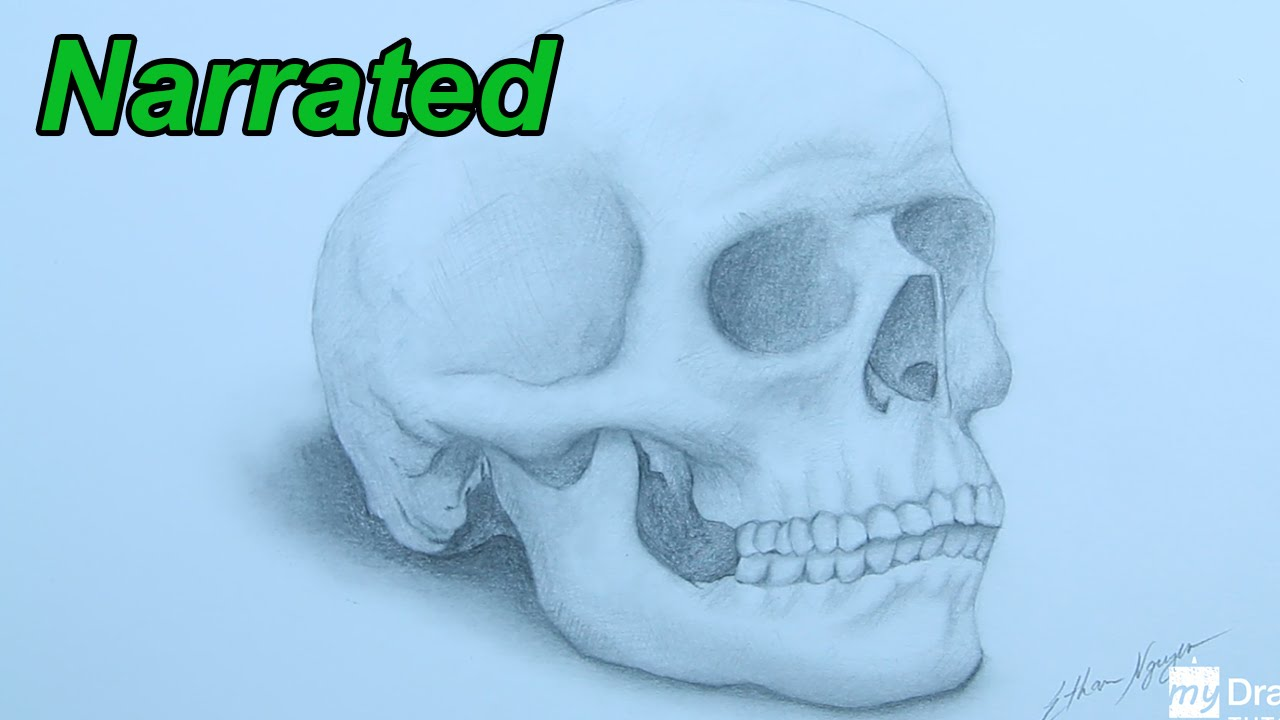 How To Draw A Skull - Drawing Human Anatomy (Narrated) - YouTube