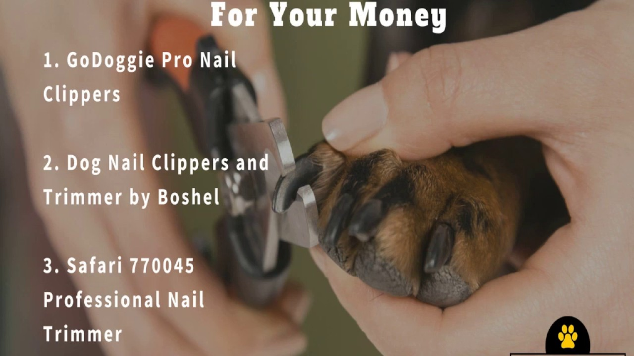 Best Dog Nail Clippers For Your Money
